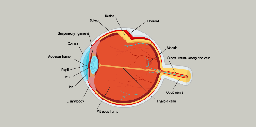 Identifying Key Components of Diabetic Retinopathy